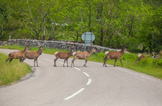 What should you do if you see an animal on the road? Or if you hit one?