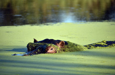 Anthrax is being blamed for the sudden deaths of over 100 hippos in Namibia