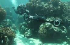Survey to give fascinating glimpse into life on barrier reef