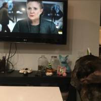 This Instagram of Carrie Fisher's dog watching her in the new Star Wars trailer is too much