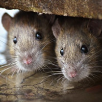 Here's what you need to do to avoid visits from unwanted rodents this winter