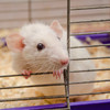 'Severe' experiments on live animals increased in Ireland last year