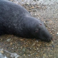 Dolphin and seal found dead on Waterford beach
