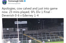 The Fermanagh GAA Twitter account sent potentially the best Irish tweet of 2017 when covering their league final