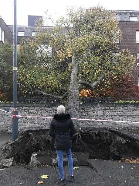 Trees fell in several areas, including Ballsbridge in Dublin
