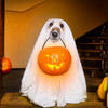 Poll: Do you plan on dressing up for Halloween?