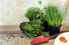GIY: Grow your kitchen herbs indoors and have a constant winter supply