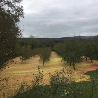 Storm Ophelia shook a blanket of apples out of a Tipperary cider orchard