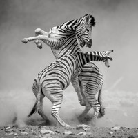 Check out these incredible images from Nat Geo's nature photography contest