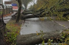Locals to gather in Cork to remember 600 trees 'lost' in Storm Ophelia
