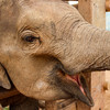 'Maternity leave' compensation system could help increase elephant population