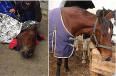 This horse was rescued from the Grand Canal before Storm Ophelia... See how Polly's doing now