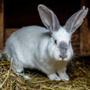 Polish government under fire for video encouraging people to 'breed like rabbits'