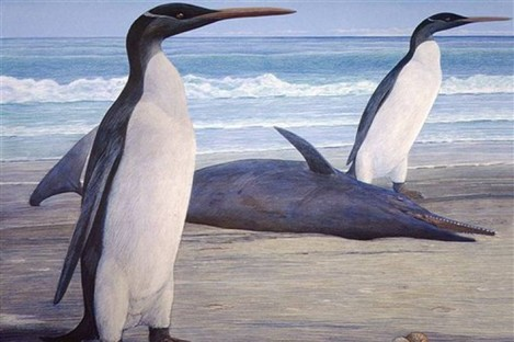 An undated illustration released by University of Otago depicting the now-extinct Kairuku.