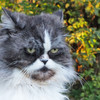 Stray cat is a suspect in Japanese attempted murder case after pensioner found covered in blood