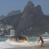 Pictures: Giant whale washes up on iconic beach in Rio de Janeiro