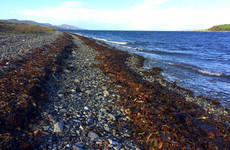 Controversial Cork seaweed harvesting project close to getting final green light