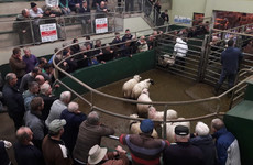Want to get married in a cattle mart? You could be in muck