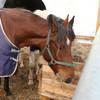 The volunteer-run farm where Ireland's mistreated horses are nursed back to health