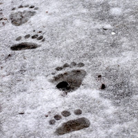 New report reveals bear facts about the Yeti