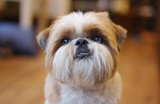 'A victory for common sense': New rules clear the way for dogs in cafés and pubs