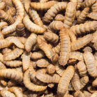 A Meath startup is betting on insects to reinvent how we produce food