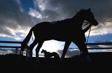 Three Irish jockeys handed two-year bans for cocaine use