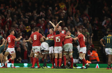 Wales survive Springboks comeback as Parkes stars on debut