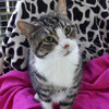 ISPCA urging public to come and rehome cats who were used at research facilities