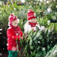 Buying your Christmas tree this weekend? Here's how to pick the right one and keep it fresh