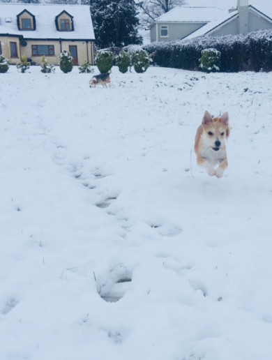 PHOTOS: It's snowing in many parts of the country