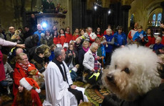 There was a carol service for therapy dogs in Christ Church yesterday and the photos are cute out