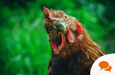 Gardening column: How to keep hens