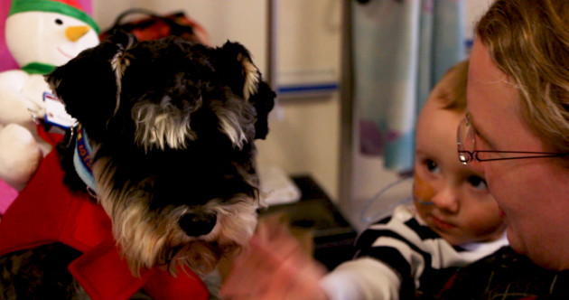 Meet the dogs helping to cheer up sick children in Temple Street hospital