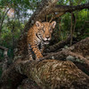 PHOTOS: Here are National Geographic's best images of 2017