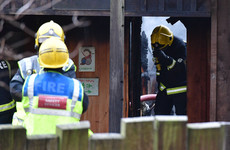 Aardvark, meerkats killed in fire at London zoo