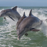 Sex of Mexican fish species so loud it could deafen dolphins, according to scientists