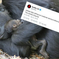 People want a 'gorilla channel' from Netflix after a Twitter user made it up and claimed Trump watches it