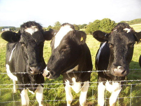 Ireland's greenhouse gas emissions have fallen - and scientists discover cow methane is not the worst culprit in agriculture
