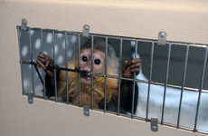 "Justin Bieber's pet monkey still ""has issues"" five years after the singer abandoned him in Germany"