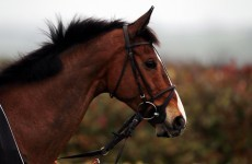 Kauto Star on track for Cheltenham recovery