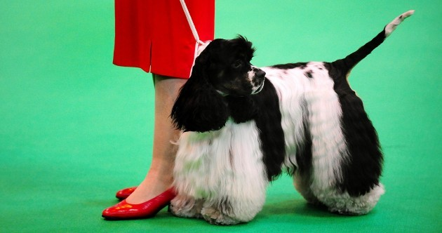 In pictures: It's a dog's life at Crufts