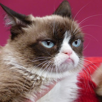 Grumpy Cat wins €570,000 payout in copyright lawsuit