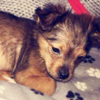 Police call for restraint after a young puppy was killed with a hammer in Armagh