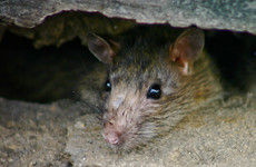 Food businesses closed due to 'overflowing human excrement' and 'presence of a live rodent'