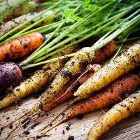 Organic food provides significant environmental benefits to vegetarian diets - research