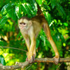 Scores of monkeys are wrongly being killed in Rio in a yellow fever panic