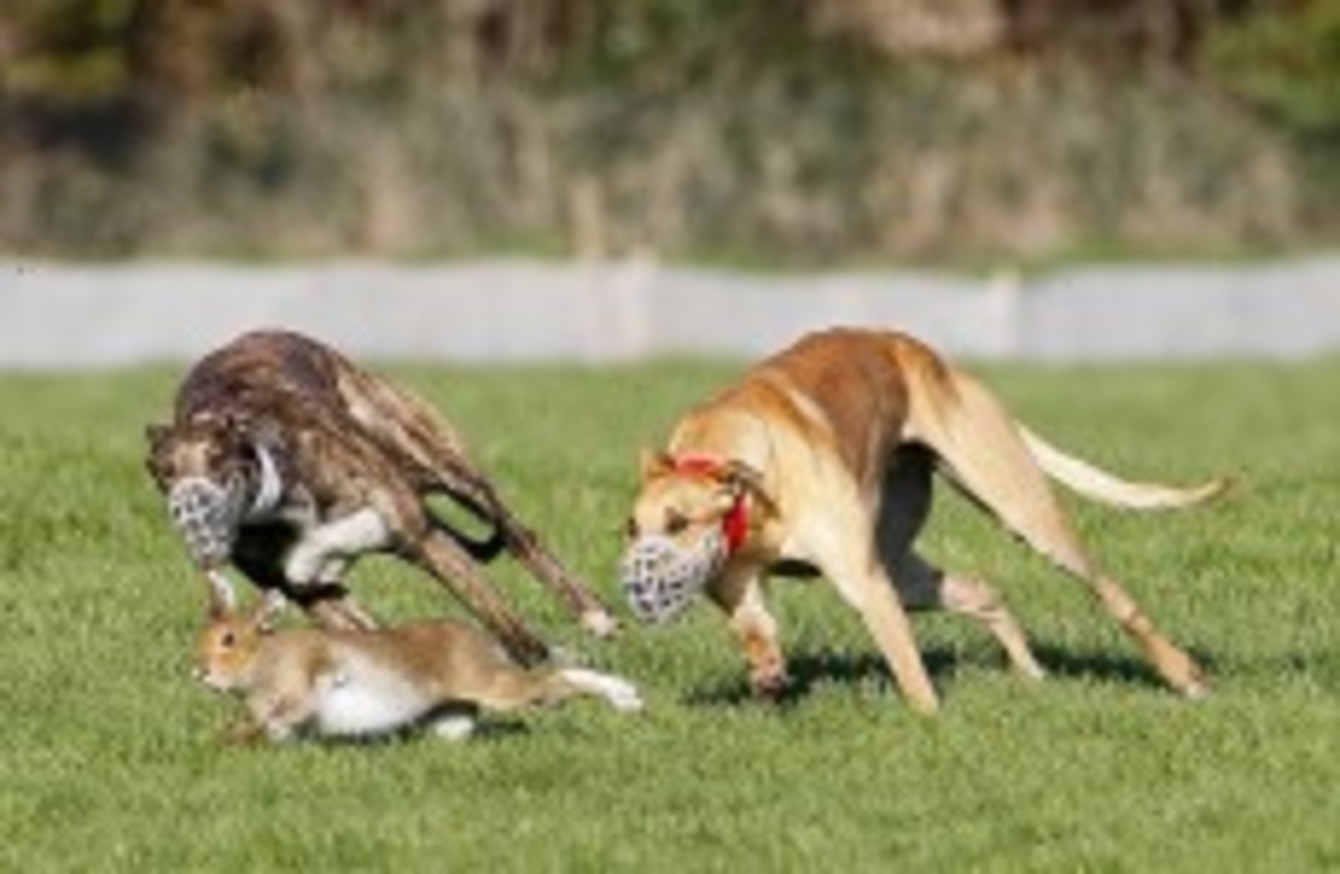 43ff7a5fcba0 Anti-hunting activists have hit out at the Government for exempting hare  coursing from animal cruelty laws. So what do you think?