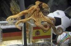 We saw this coming: Paul the Octopus dies at 2