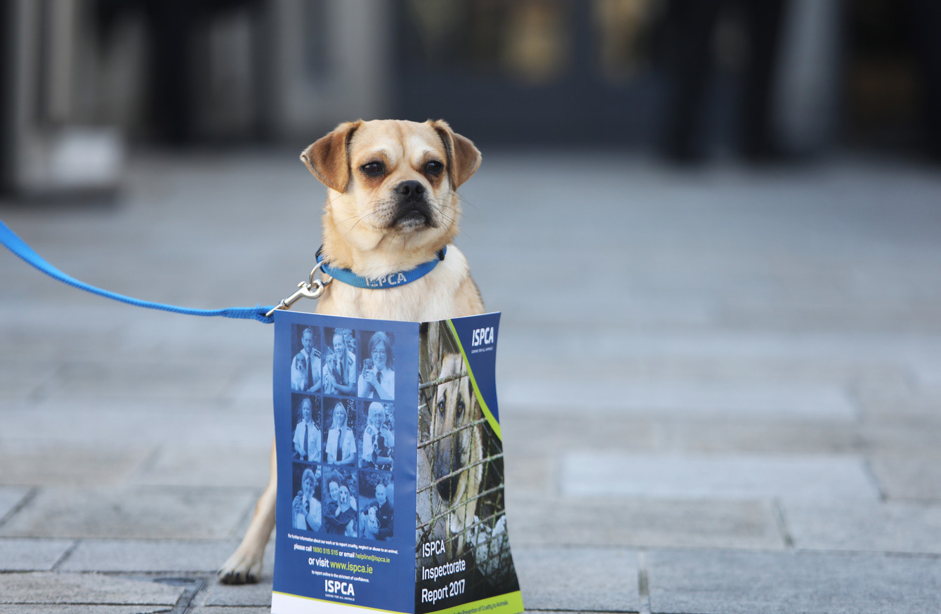 Over 1,200 vulnerable animals were seized by the ISPCA last year